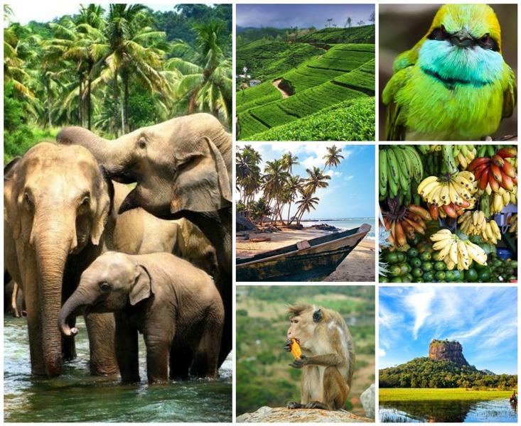 Шри-Ланка - Прямые вылеты на Шри-Ланку!