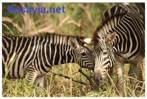Гамбия - Парк Фатал